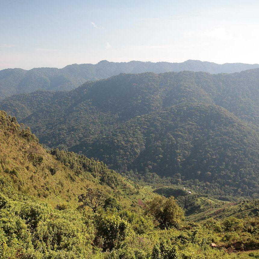 Uganda National Forestry Authority